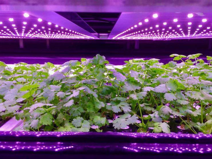台企业抢攻丹麦市场 提供全年无休培植蔬菜
