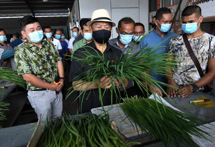 慕尤丁吁武吉甘蜜新港菜农 建一站式农业旅游中心