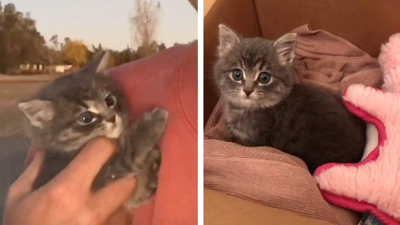 Kind-Hearted Man Rescues Tiny Kitten From Street