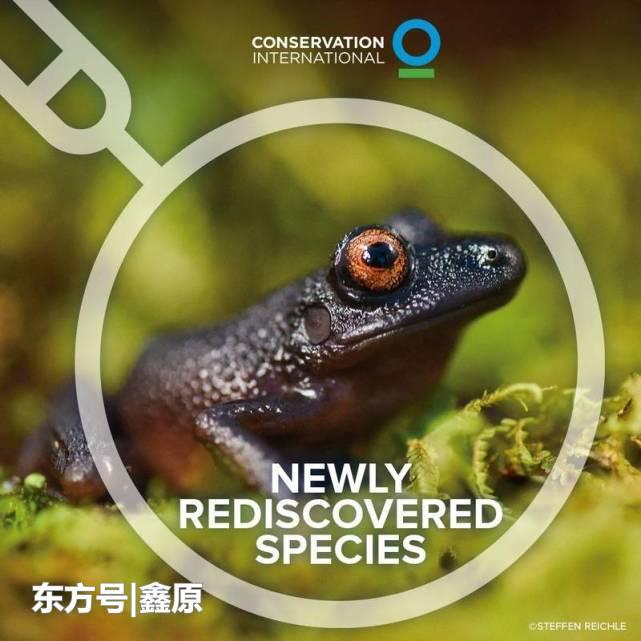 """大惊喜!曾被认为已灭绝的动物还存在,""""魔眼蛙""""重现玻利维亚"""