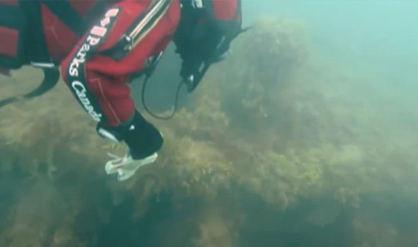 Archaeology breakthrough: Shipwreck 'mystery' after discovery in 'Arctic wasteland'