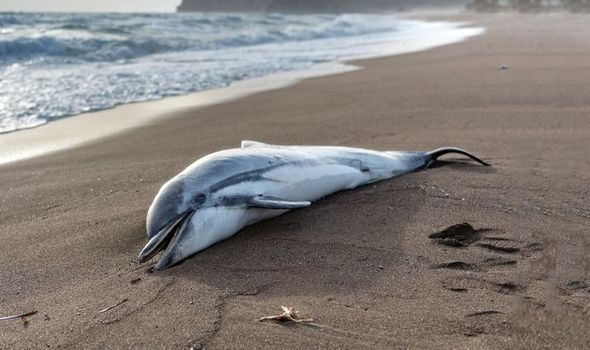 EU's apathy is killing dolphins as they drown in fishing nets, campaigners say
