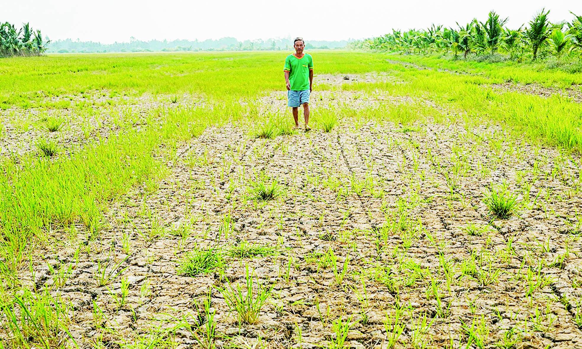 湄公河三角洲天灾多 越南逾130万人口外流