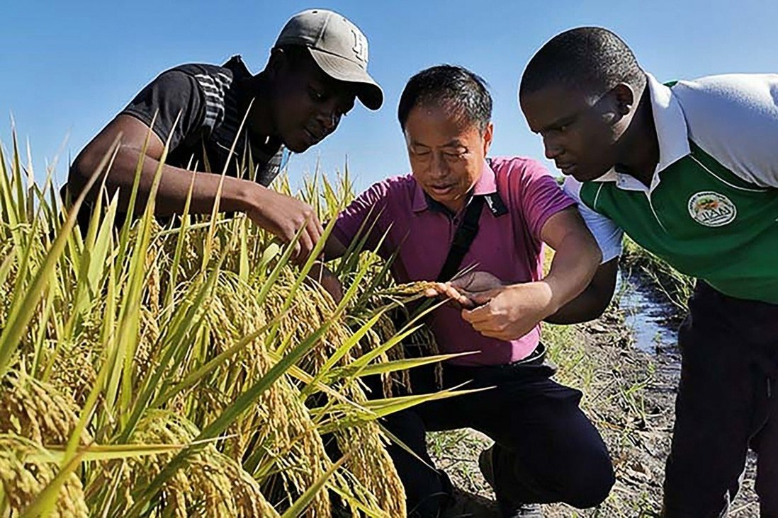 China-Africa relations: Chinese agriculture experts help boost crop yields