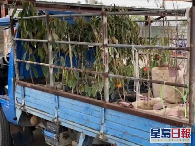 台男被园艺友两次盗树苗 包括3万元大马榴槤树苗