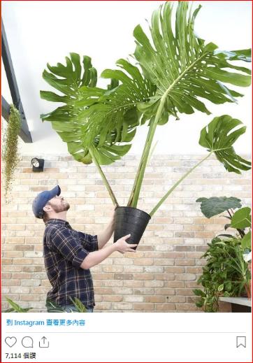 他在家里种出摇钱树 一片叶子赚1.6万刀