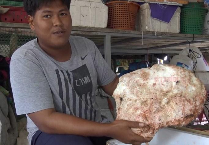 宋卡传发现龙涎香 重量达7公斤