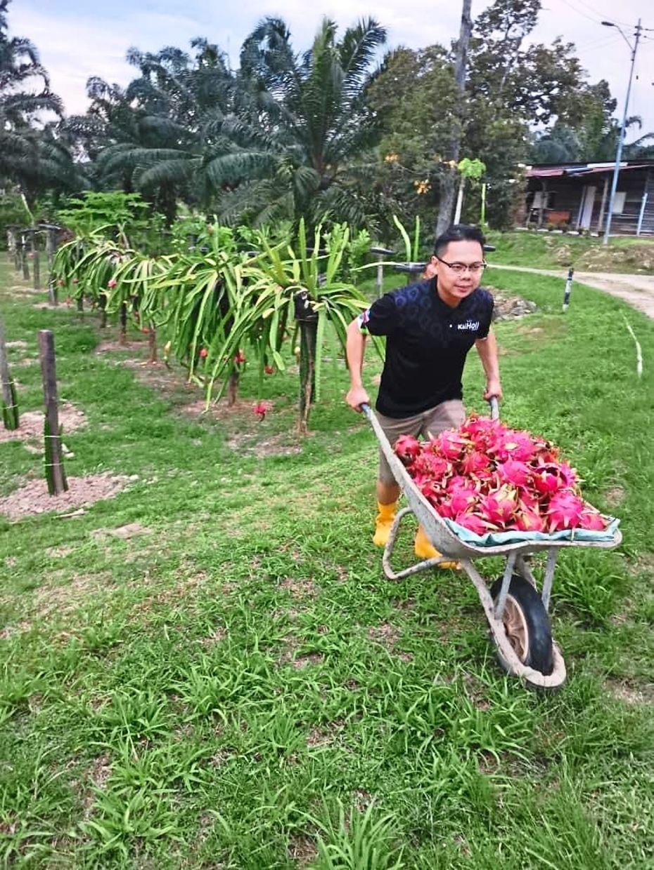 Tenom fruit farmers fear more losses