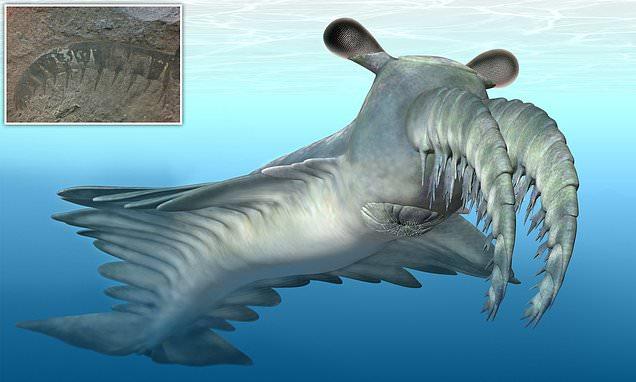 Bizarre sea beast sparked a 'prehistoric arms race' 500million years ago