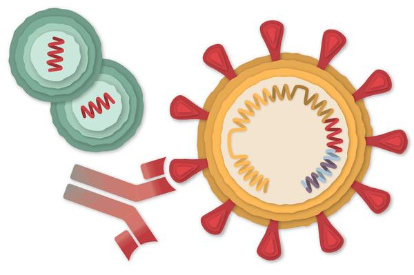 Vacuna de Johnson & Johnson para la COVID-19: los riesgos, si los hay, son muy bajos