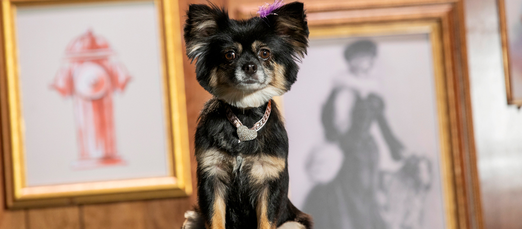 What's On Tonight: 'Haute Dog' Is Back, Baby