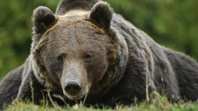 马桶内有熊! 女子如厕被抓伤