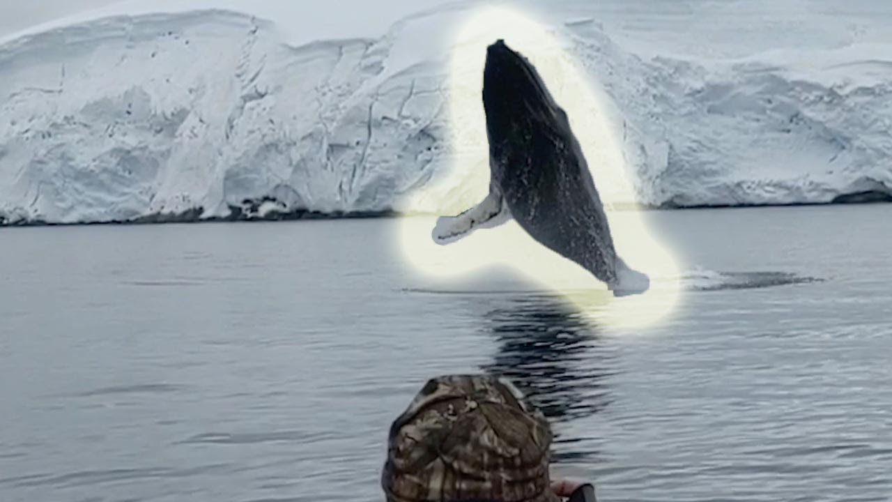 Amazing Humpback Whale Breach Caught On Camera