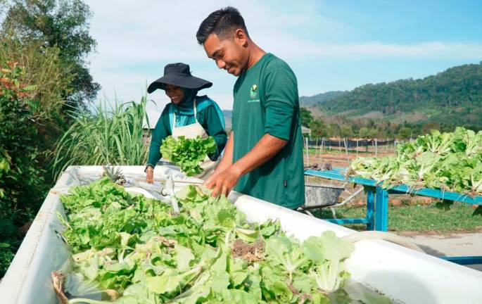Pick your own fresh produce at Lang Agro Park