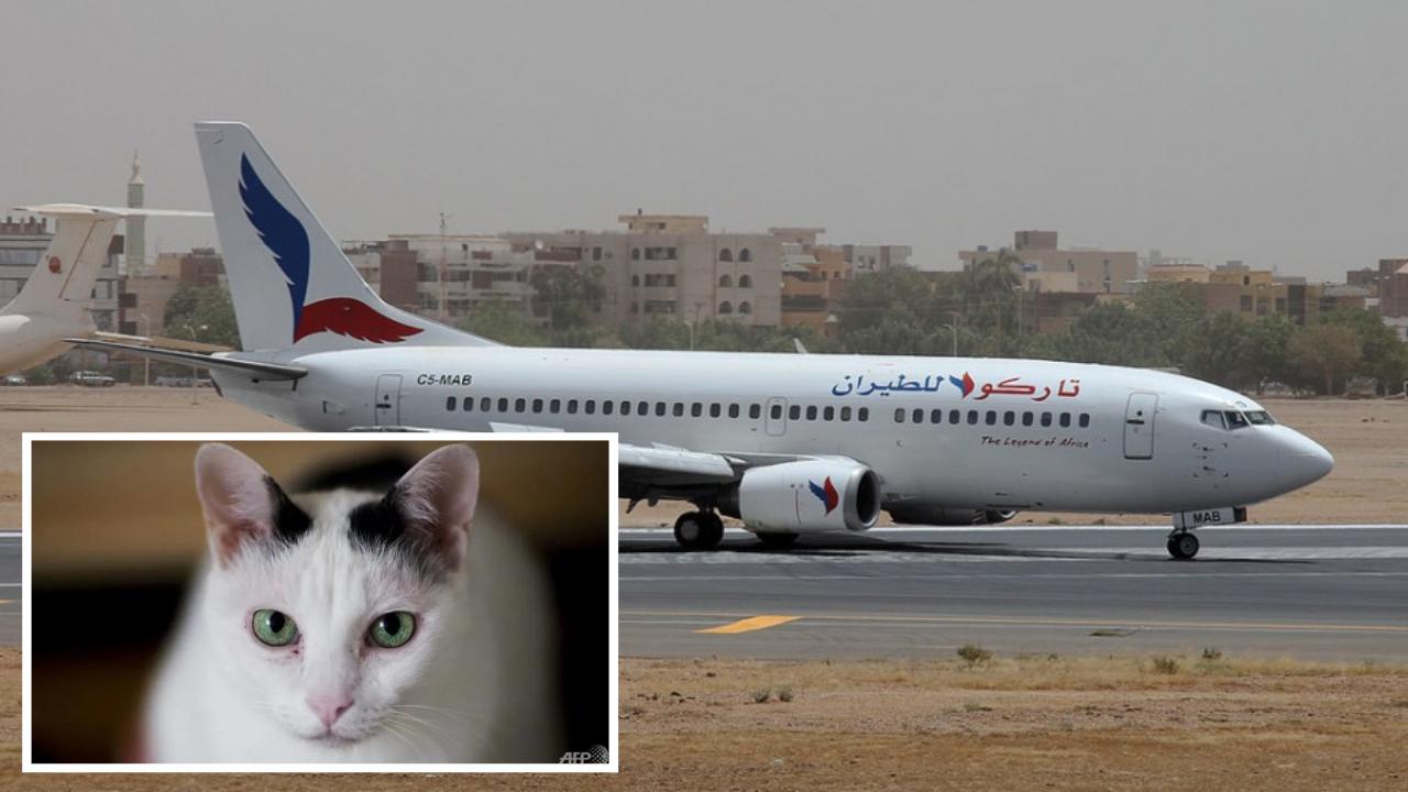 """猫咪闯入驾驶舱""""突袭""""飞机师 塔科客机紧急返航"""