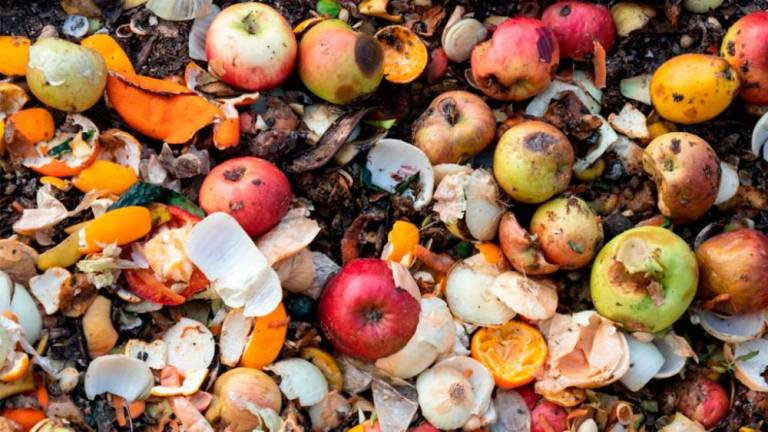 Food waste: Amount thrown away totals 900 million tonnes