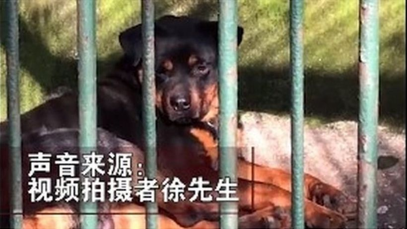 China zoo 'tries to pass dog off as wolf'