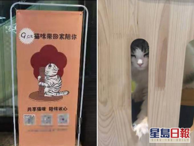 四川现「共享猫咪」9.9人仔一天 生意火爆所有猫已租出去
