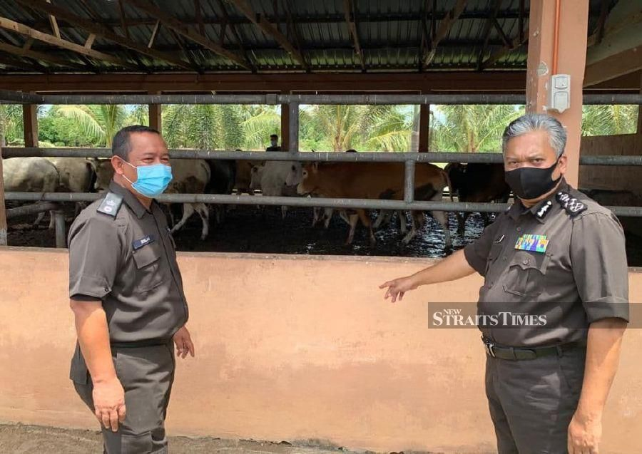 90 per cent of smuggled cattle infected with FMD - Maqis