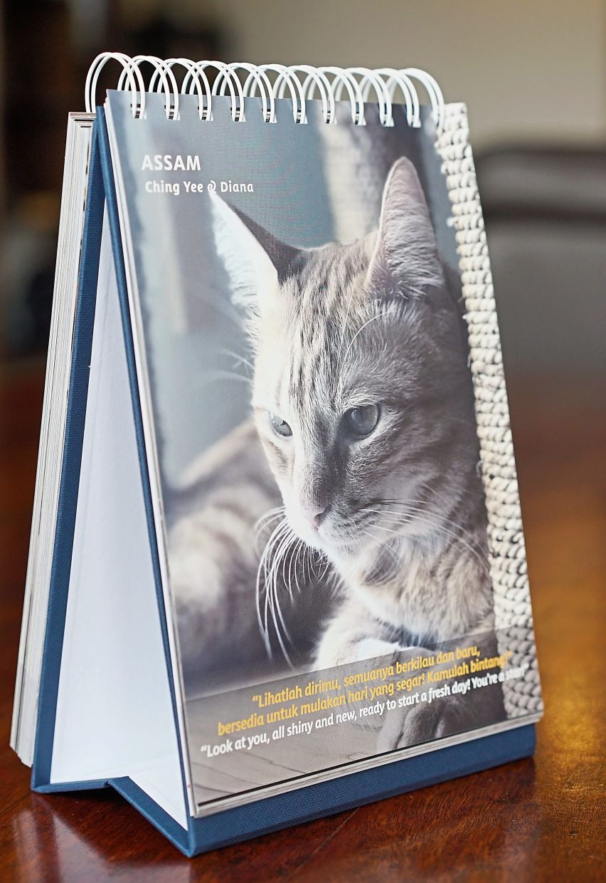 258 rescued cats are featured in this desktop book fundraiser