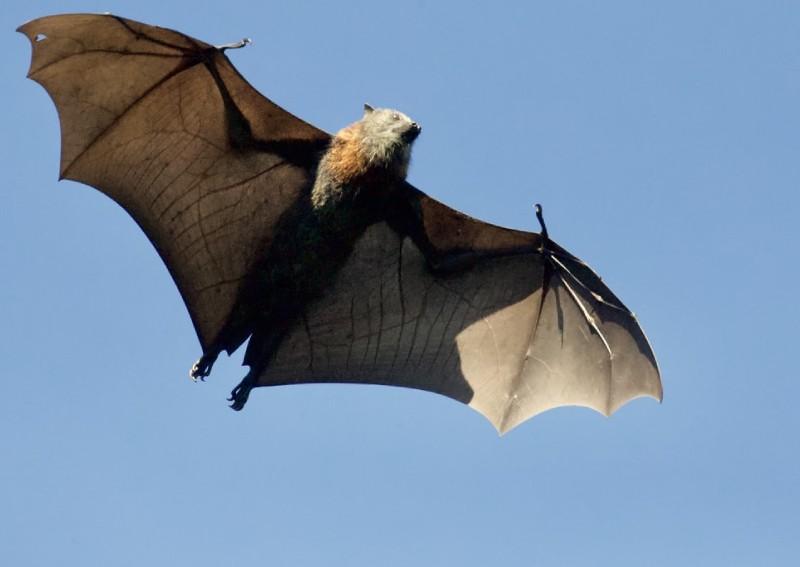 China research team finds 24 new bat coronaviruses within 2km radius