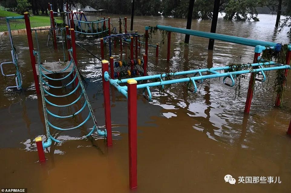 澳洲大洪灾后毒蛇蜘蛛老鼠泛滥满地,而澳洲人还在游野泳!(组图)