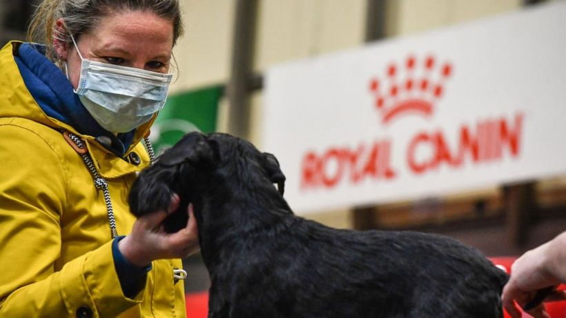 Crufts 2021 cancelled amid Covid 'uncertainty'