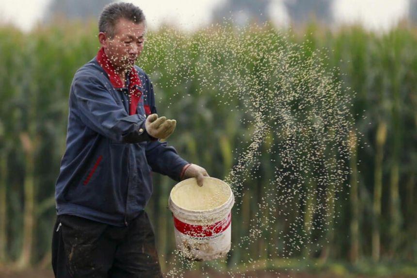 Across China: Cropland 'nannies' bring Chinese farmers into modern era