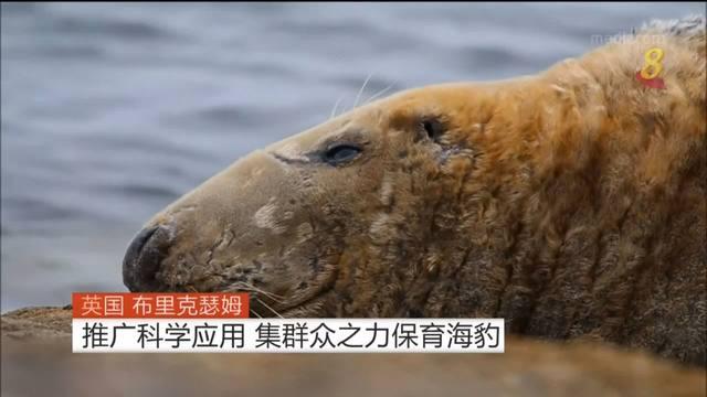 英国布里克瑟姆推广科学应用 集群众之力保育海豹