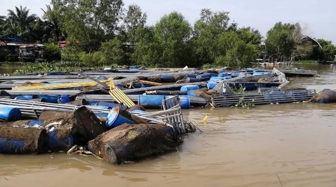养鱼场鱼排绳索断裂 淡水鱼游入霹雳河