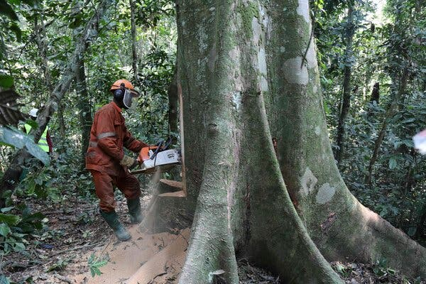 Tropical Forest Destruction Accelerated in 2020