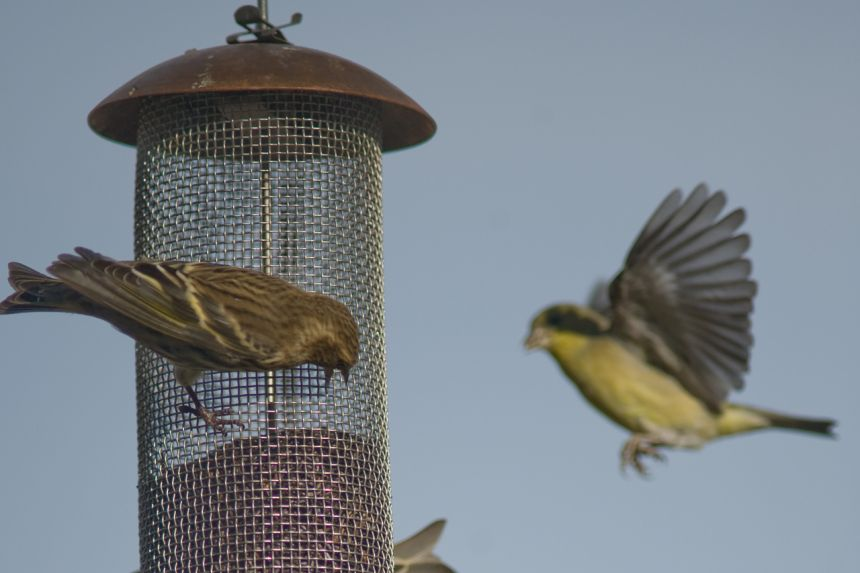 Salmonella outbreak in the US is linked to wild birds and feeders: CDC