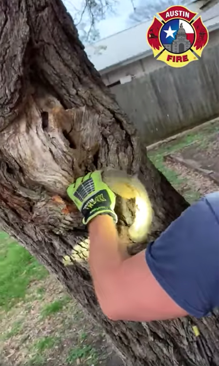 Austin Firefighters Save Squirrel Who Got Its Head Stuck in a Tree: 'Not an April Fools' Joke
