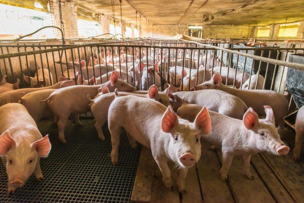 你嫌弃的养猪职业,猜猜看年薪多少?有 30 万