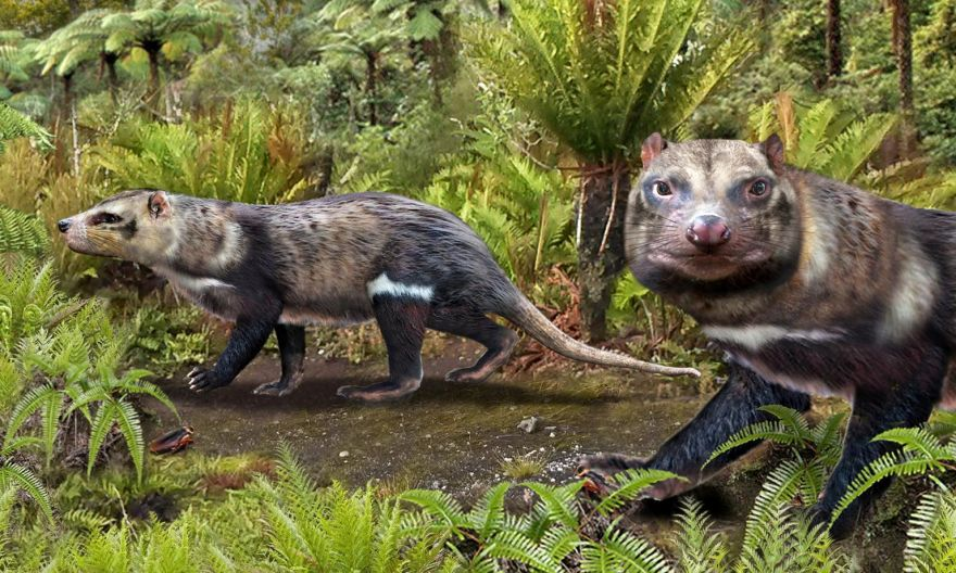 Beast of five teeth: Chilean scientists unearth skunk that walked among dinosaurs