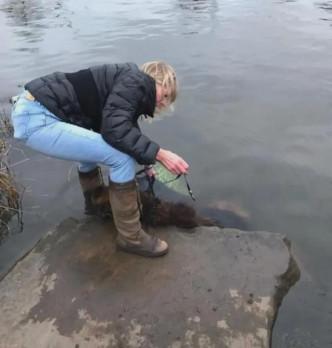 德国牧羊犬被主人绑石沉进河 大难不死命运逆转