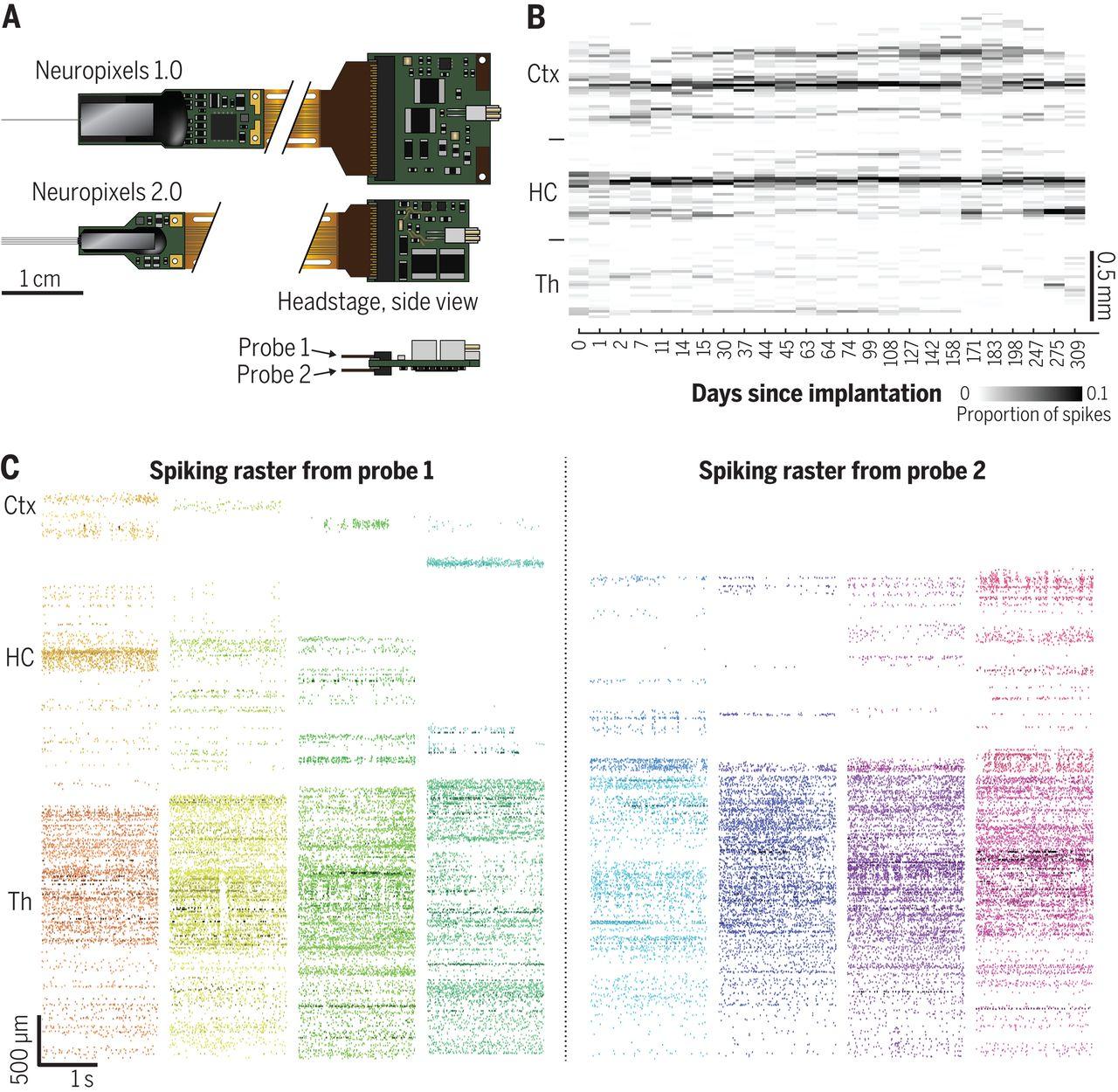 Neuropixels 2.0: A miniaturized high-density probe for stable, long-term brain recordings