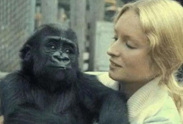人类能和黑猩猩产生后代吗?女科学家拿自己做了实验,结果感人
