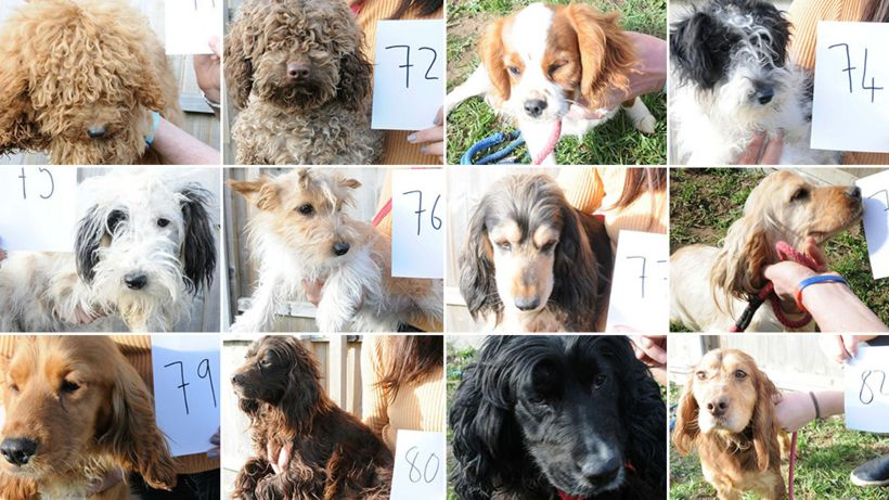 Ipswich dogs raid: Images released in bid to find owners