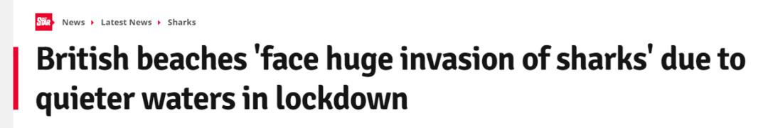 英国海域被曝面临鲨鱼大规模入侵,背后原因竟是新冠病毒肆虐?(组图)