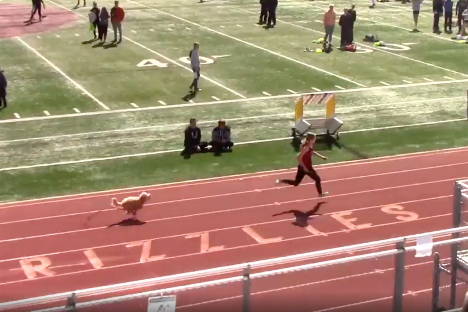Watch a Speedy Dog Interrupt a Utah Track Meet and Beat All the Runners to the Finish Line