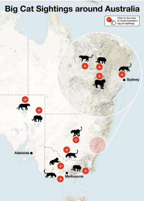 """蓝山真的有""""大猫""""!新州探险队发现大量野兽脚印,当地宠物""""神秘""""惨死...(组图)"""