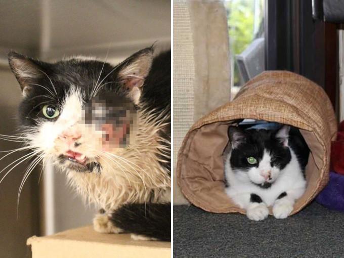 爱猫出车祸主人下葬5天后 竟如「丧尸猫」般爬回家