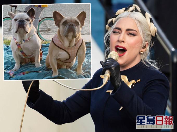 Lady Gaga斗牛犬被抢案5人被捕 其中1人自投罗网