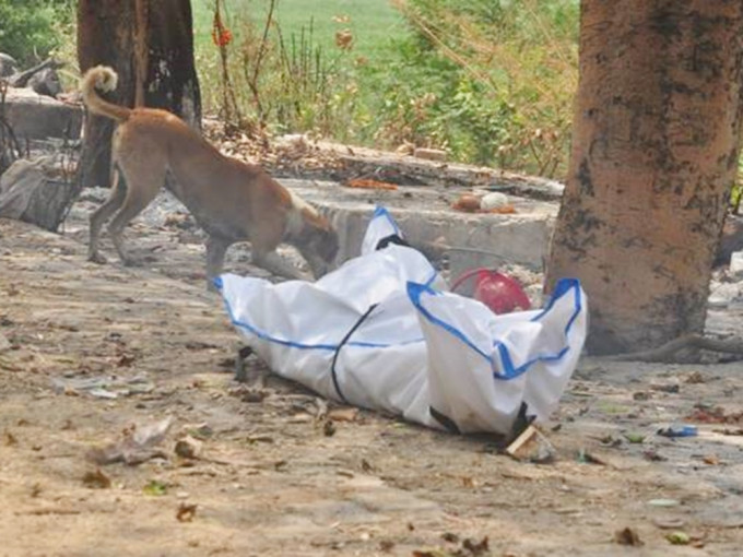 印度染疫尸未及火化 法官沦为野狗食物遭咬烂脸部