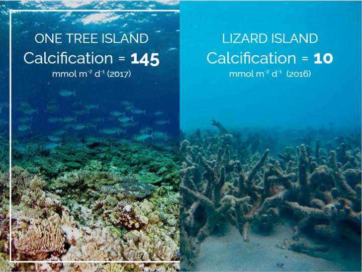 Declining growth rates of global coral reef ecosystems