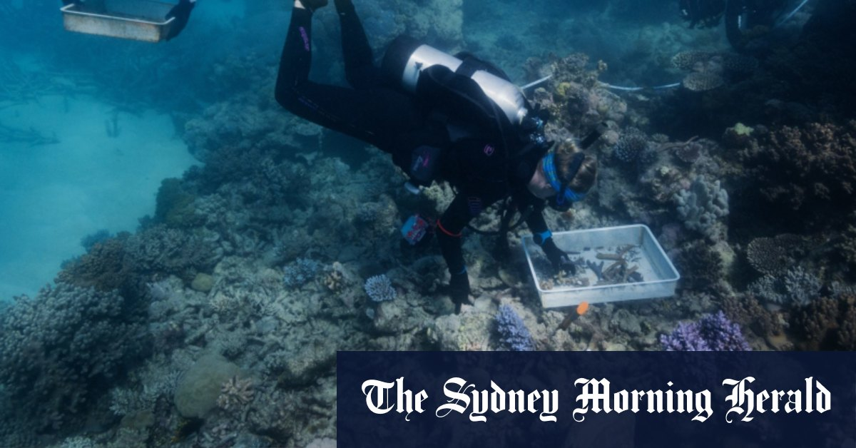 Coral carpentry on the Great Barrier Reef