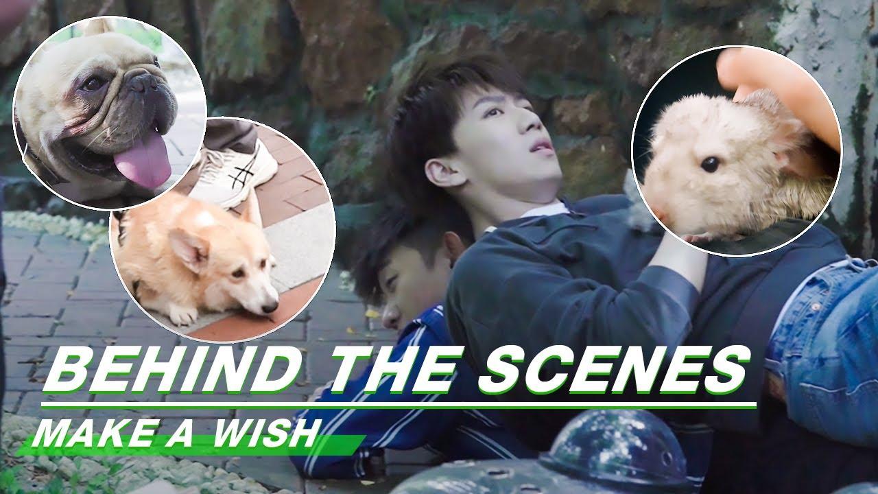 Behind The Scenes: Little Sweeties   Make A Wish   喵,请许愿   iQiyi