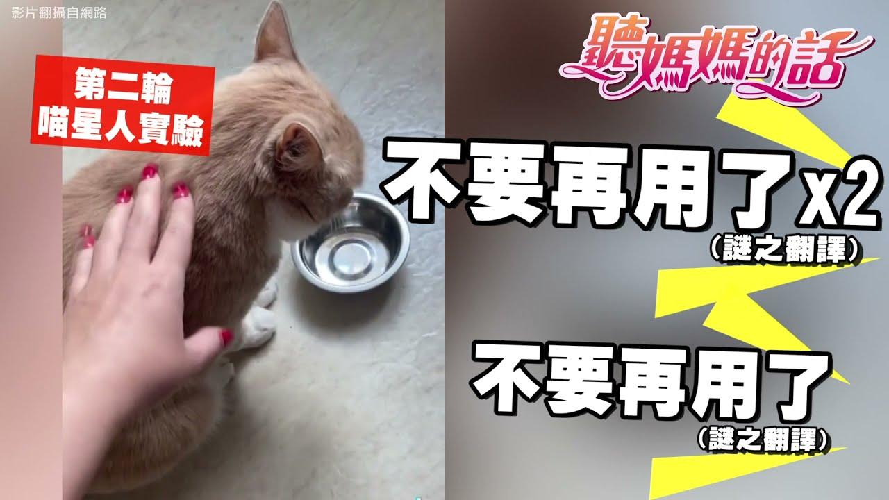 """比人类还要伸手牌的猫!!""""啃妈族""""猫咪肚子饿大敲碗!!【年代MUCH台 听妈妈的话】"""